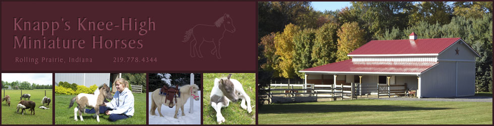 Knapp's Knee-High Miniature Horses